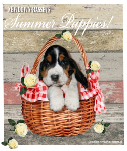 Summer puppies!