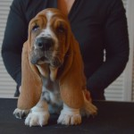 NewDown Bassets Unbreakable Love
